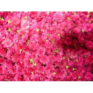 Frische Blüten