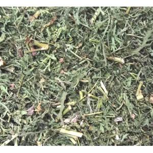 Artemisia annua / vrac