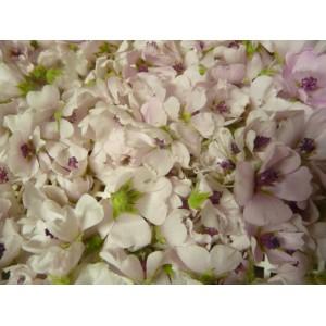 Guimauve fleurs 15g